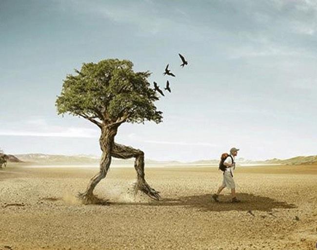 Arbre racines 1