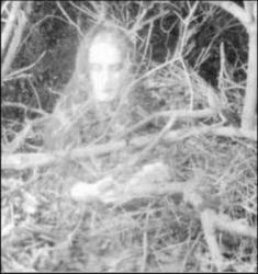 Fantome dans les bois