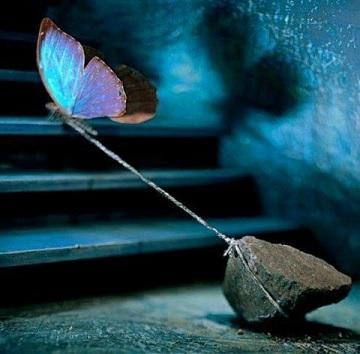 Papillon pardon