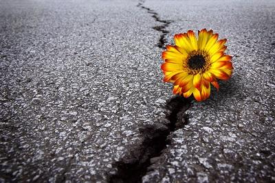 http://erwan-bucklefeet.e-monsite.com/medias/images/resilience-fleur-bitume.jpg