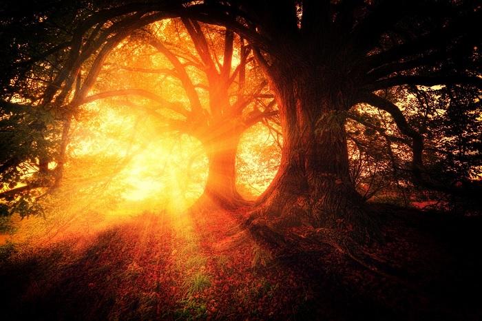 Soleil arbre
